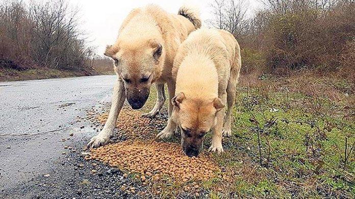 Türkiye'yi etkisi altına alan koronavirüs salgını sonrasında iş dünyası sokak hayvanlarını da unutmadı