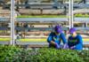 Dikey tarım girişimi Bowery, 300 milyon dolar yatırım aldı