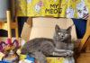 Yerli girişim WufWuf'tan kediler için oyuncak ve ödül mamalarından oluşan yeni ürün: My Meow